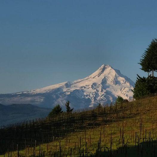 Vineyard Mountain View